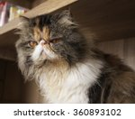 Stock photo the angry cat 360893102