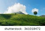 Mountain Tea Plantation With...