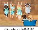Stock photo funny group of american staffordshire terrier puppies with little red cat hanging on a clothesline 361302206