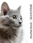 Stock photo little kitty 361414568
