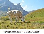 cows in an alpine meadow.... | Shutterstock . vector #361509305