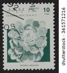 Small photo of SAHARA - CIRCA 1992: A stamp printed in Sahrawi Arab Democratic Republic (SADR), depicts a flower Aeonium arboreum, circa 1992