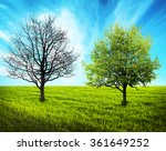 Two Trees On Green Field