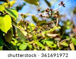 teabag from a bouquet of... | Shutterstock . vector #361691972