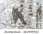 Stock photo great horned owl 361949522