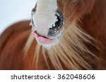 Funny Licking Horse With Long...