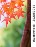 red leaves of japanese maypole... | Shutterstock . vector #362053766