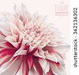 Vector Dahlia Flower Backgroun...