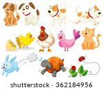 Stock vector different kind of domestic animals illustration 362184956