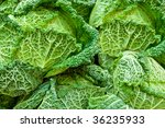 close up of green cabbage taken ... | Shutterstock . vector #36235933