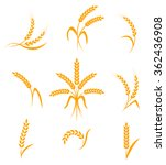 wheat ears or rice icons set.... | Shutterstock .eps vector #362436908