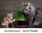 Vitamins For Cats   Germinated...