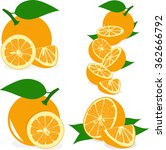orange slices  collection of... | Shutterstock .eps vector #362666792