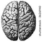 brain medical human head... | Shutterstock .eps vector #3626940