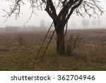Apple Tree And Fog. Seasonal...