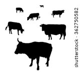 silhouette of cows grazing on a ...   Shutterstock .eps vector #362750582
