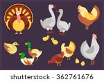 Set Of Poultry. Vector...