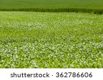 agricultural field on which...   Shutterstock . vector #362786606