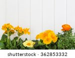 Orange And Yellow Spring...