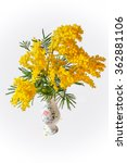 Small photo of Acacia dealbata or acacia whited (Mimosa) in vase isolated on grey background