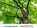 green natural background of... | Shutterstock . vector #362950796