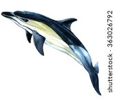 watercolor dolphin isolated on...   Shutterstock . vector #363026792
