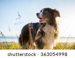 Stock photo happy dog in dunes 363054998