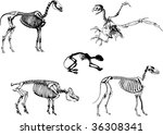domestic animals skeleton  can... | Shutterstock . vector #36308341