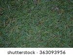 Pine Tree Needles Background