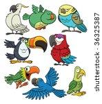 8 cartoon tropical birds. all... | Shutterstock .eps vector #36325387