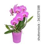 purple phalaenopsis orchid... | Shutterstock . vector #363375188