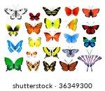 collection of butterflies | Shutterstock .eps vector #36349300