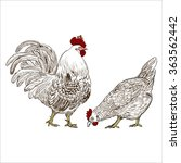 Vector Drawing Of A Rooster And ...