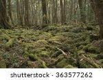 forest | Shutterstock . vector #363577262