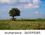 tree in a green field  | Shutterstock . vector #363595085