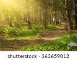 north scandinavian pine sunny... | Shutterstock . vector #363659012