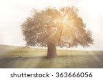 oak tree for family history... | Shutterstock . vector #363666056