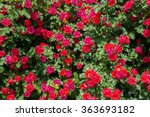 Bush Of Roses On Bright Summer...