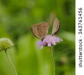 Two Butterflies On Flower