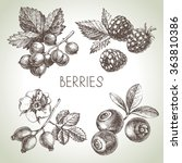 hand drawn sketch berries set.... | Shutterstock .eps vector #363810386