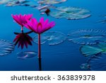 Pink And Red Lotus Lake At...
