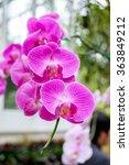 Beautiful Orchid Pink Purple...
