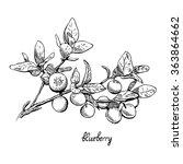 Blueberries   Monochrome  Line...
