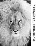 lion | Shutterstock . vector #363995852