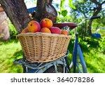 Basket Of Juicy Ripe Apricots...