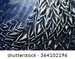 Pattern Of Feather  Closeup...