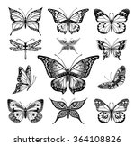 butterflies graphic illustration | Shutterstock .eps vector #364108826