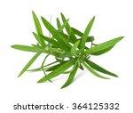 tarragon  artemisia dracunculus ... | Shutterstock . vector #364125332