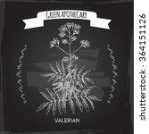 valeriana officinalis aka... | Shutterstock .eps vector #364151126