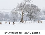 Sheep Standing Under Trees In...